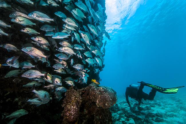 bahamas adventures tips